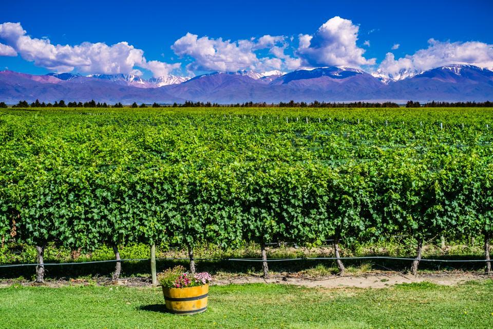 Scenic Wineyard Landscape in Mendoza, Argentina