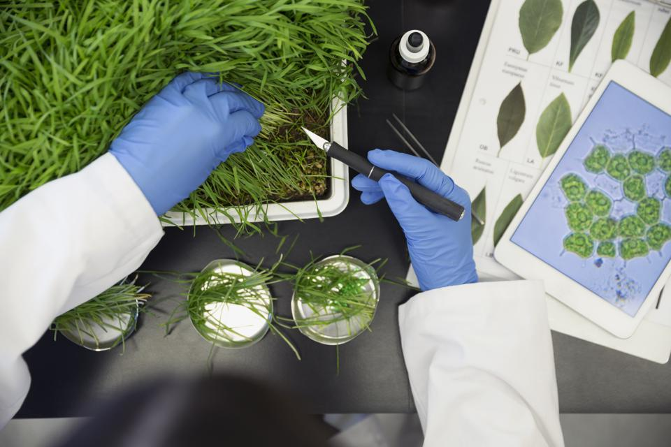 scientist examining plants in a laboratory