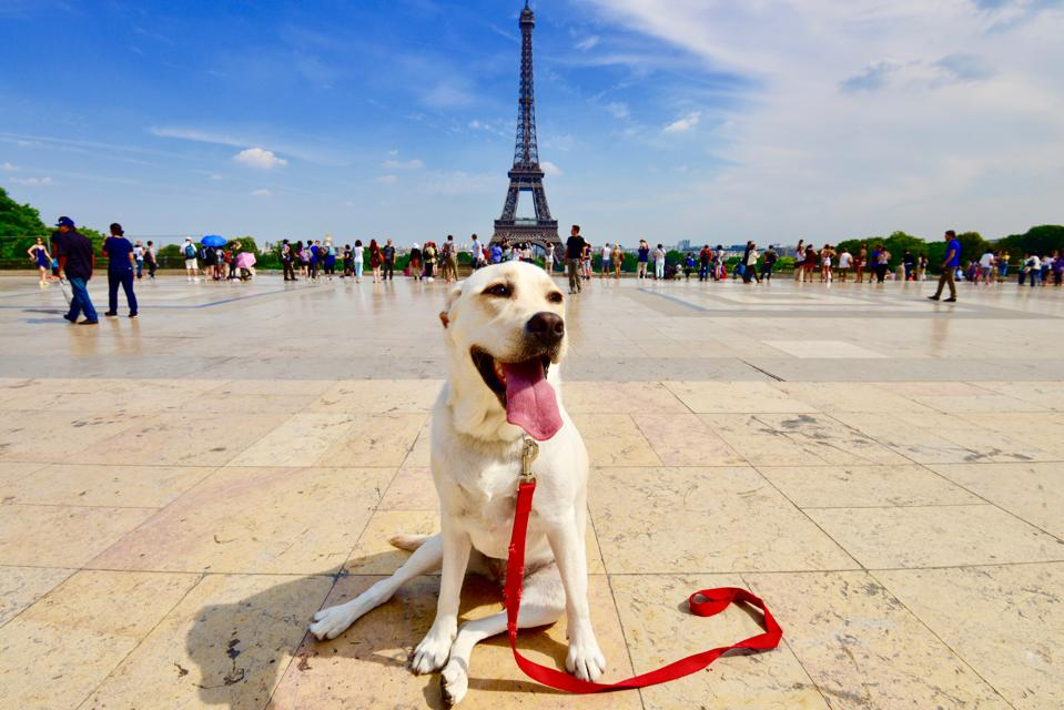 pet-friendly hotels paris