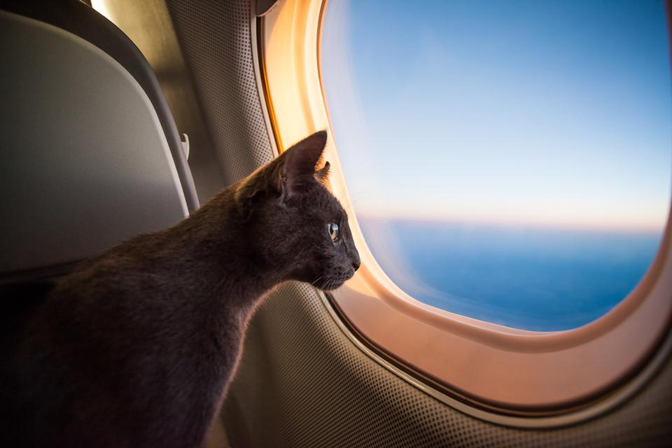 The Best Travel Gear For Cats