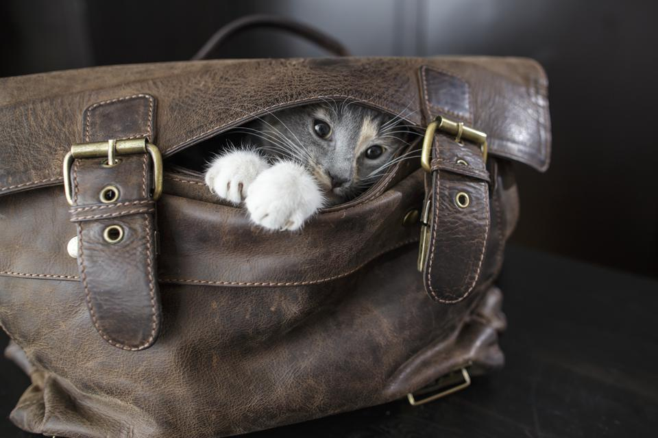 The Best Cat Carriers of 2019