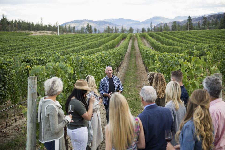 Vintner leading vineyard tour