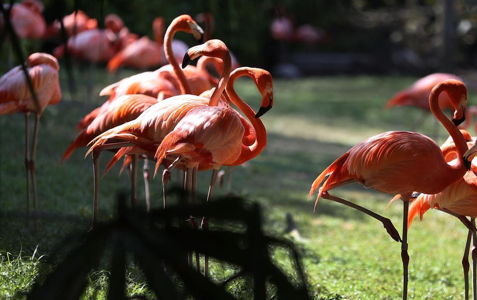 Gov. Rick Scott Announces Florida Tourism Numbers