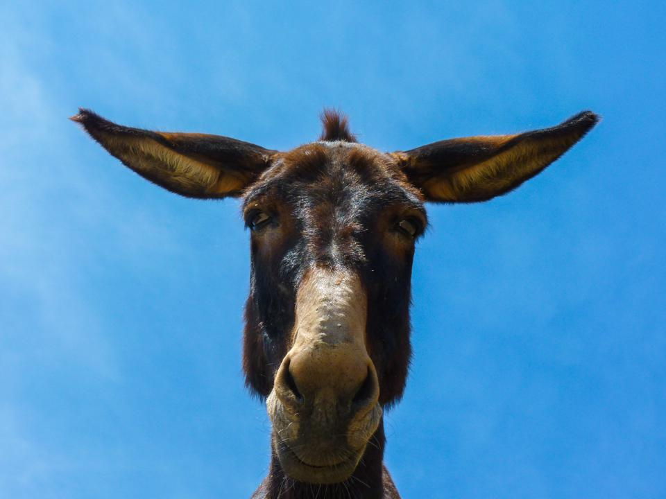 Portrait Of Donkey Against Blue Sky