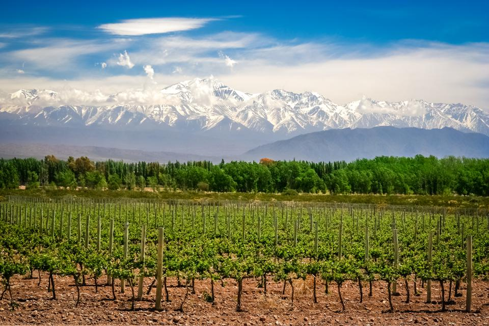 Vineyard near Mendoza. It's one of the best places to visit.