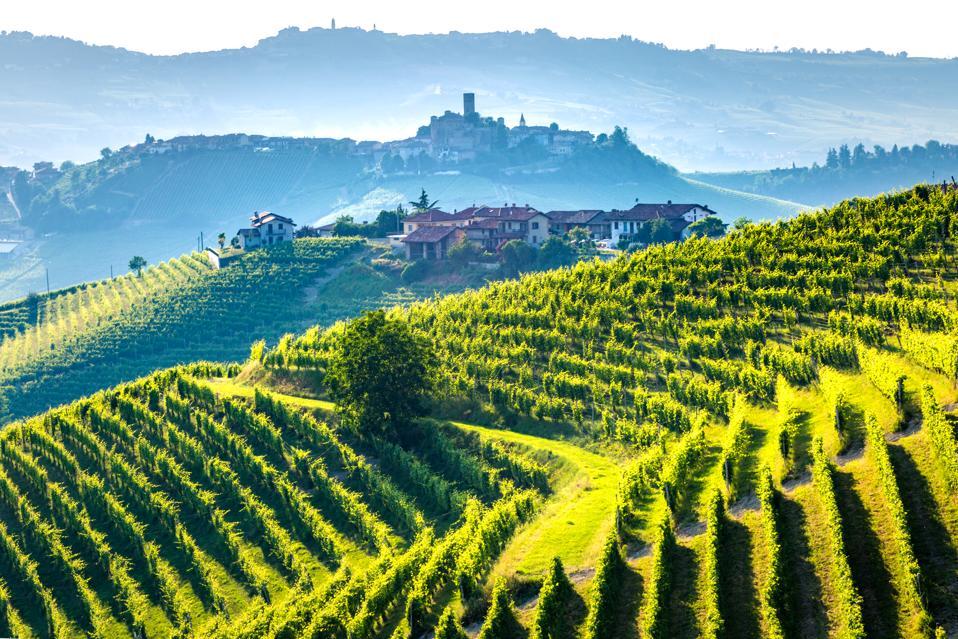 Barolo wine region, Langhe, Piedemont, Italy. Vineyards