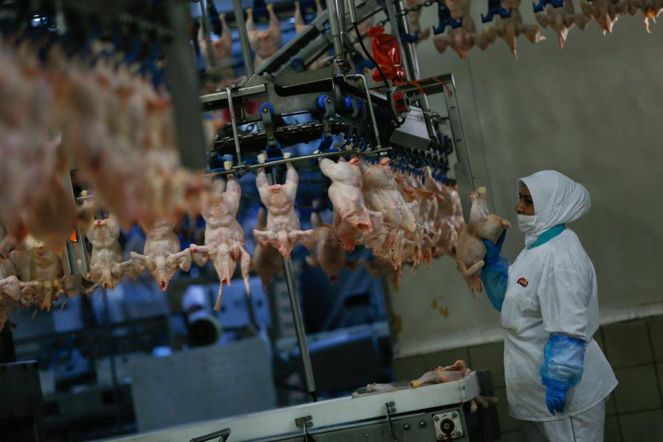 Around 300 million pounds of chicken are consumed every year, globally.