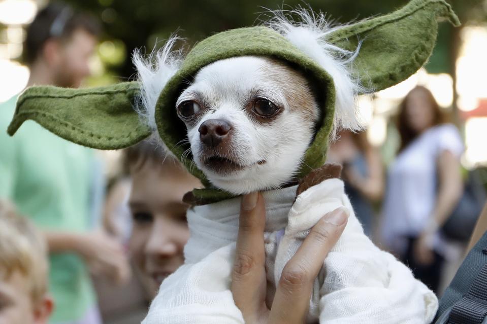 Dog dressed up as Baby Yoda