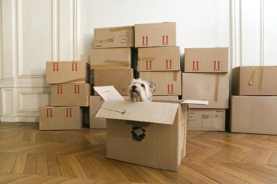 Pes v krabici v prázdném domě