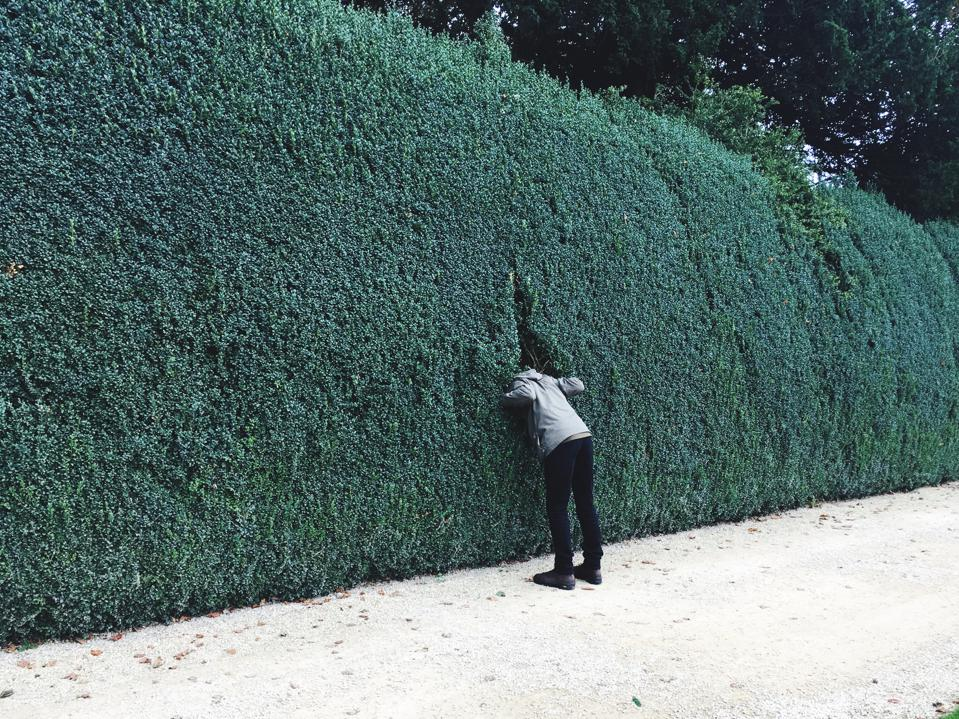 Rear View Of Man Standing By Plant Wall