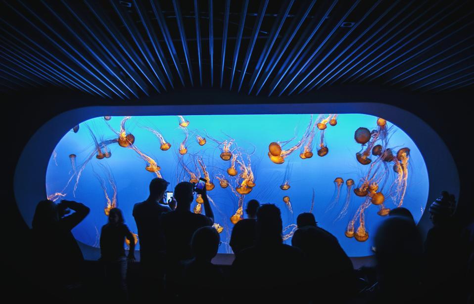 People Looking At Jellyfish At Monterey Bay Aquarium