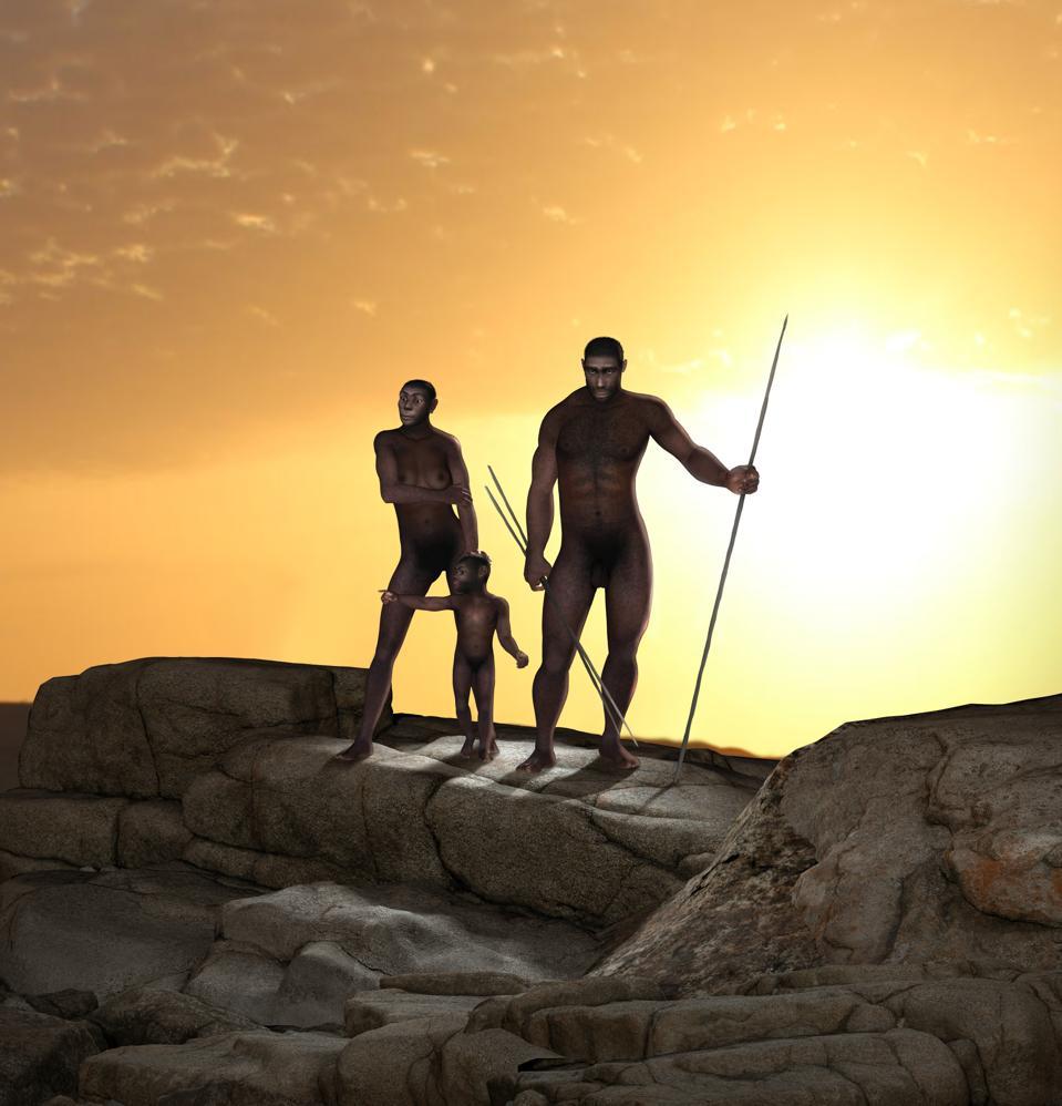 Homo Erectus Human Ancestor