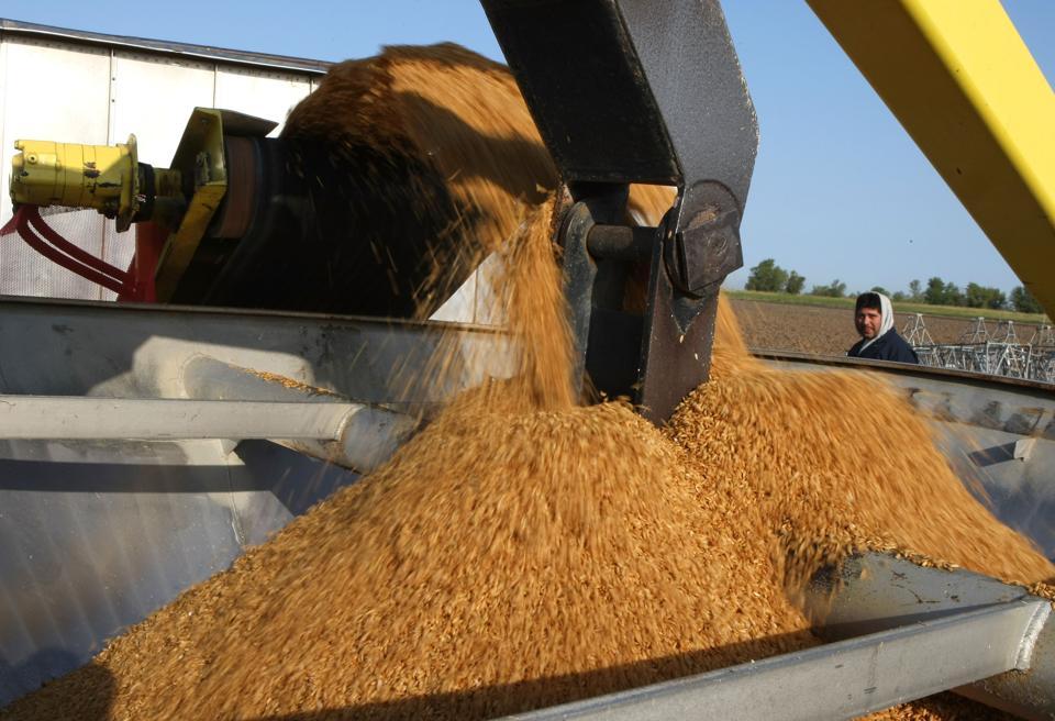 California Rice Farmers Plant New Crop Amid Global Shortage
