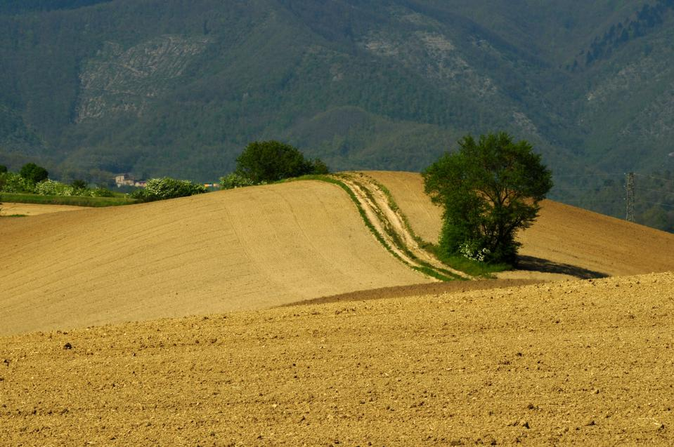 Typical Tuscan Landscape. Located at Scarperia near Florence, Italy.