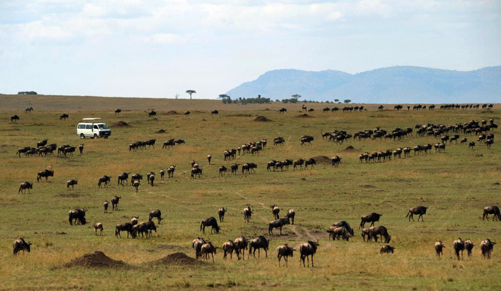 10 Questions To Ask Before Booking Your Safari