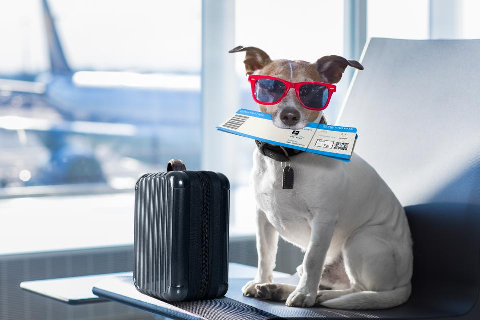 The Best Travel Gear For Small Dogs