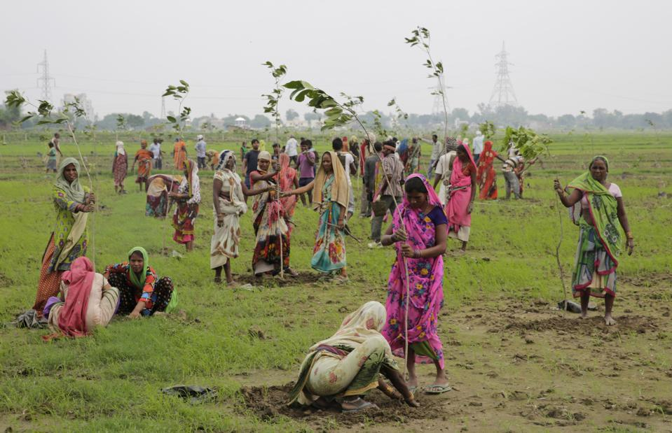 India Just Planted 50 Million Trees In 24 Hours