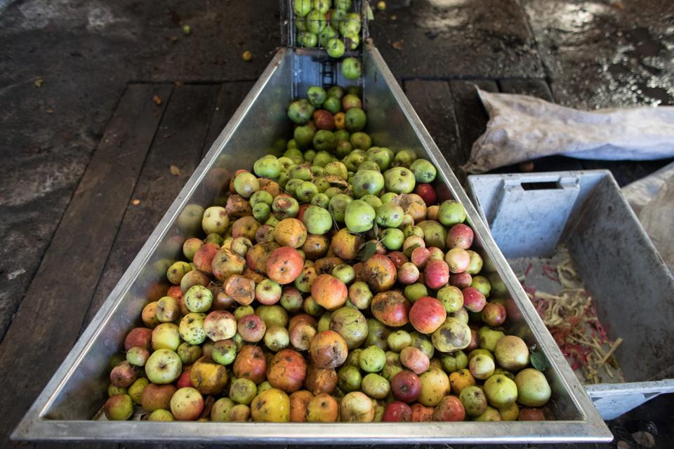 Cider Makers Enjoy A Bumper Harvest Apples are pressed to make traditional cider at Lands End farm in the village of Mudgley in Somerset. (Photo by Matt Cardy/Getty Images)