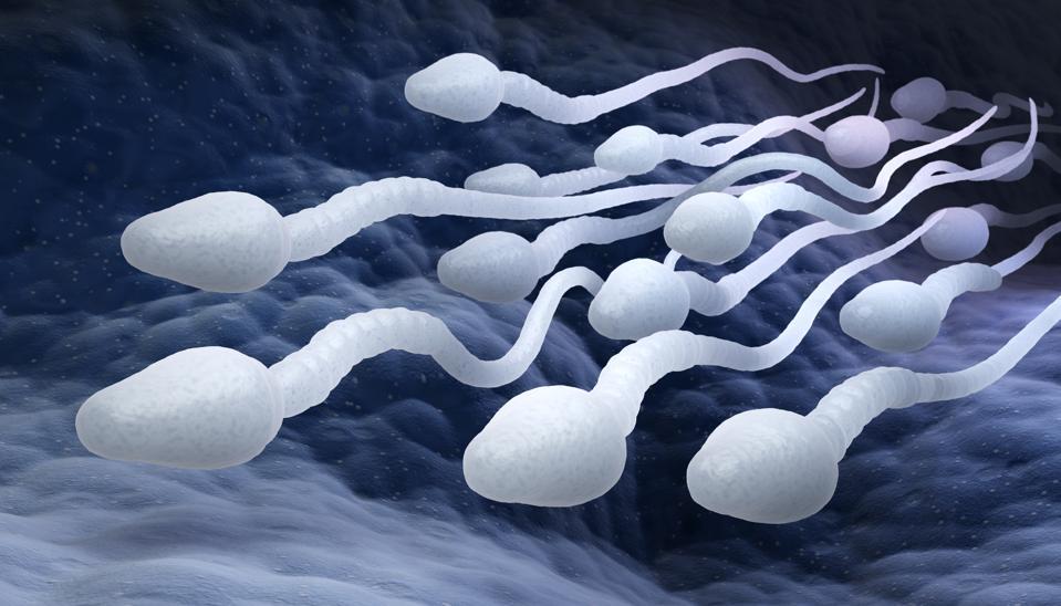 Male sperm cells