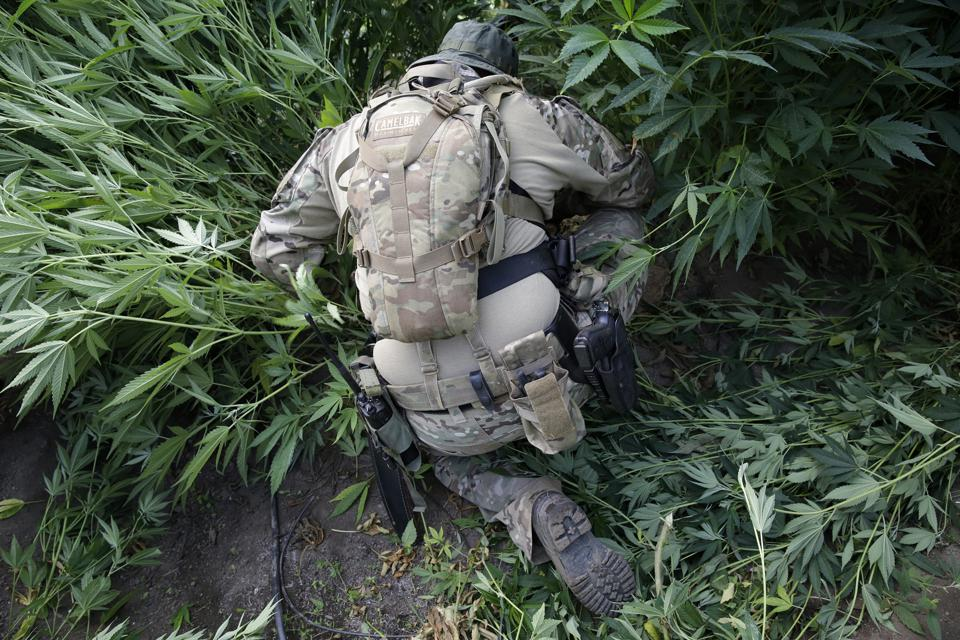Northern California Marijuana