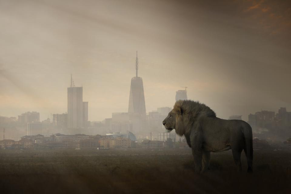 A lion with modern city skyline in the background