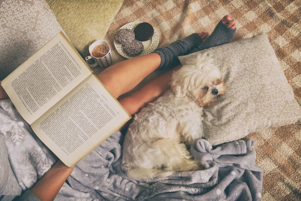5 Things To Remember When You're House Sitting