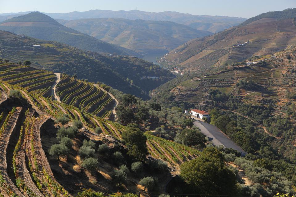 Terraced Vineyards at Quinta do Noval in Douro Valley