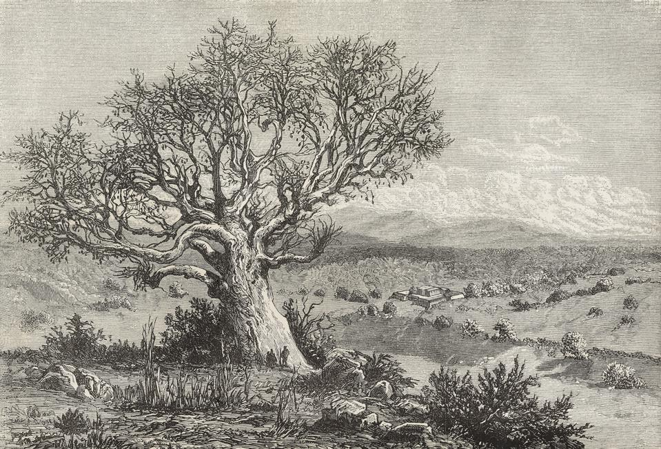 Kita plain and fort, baobab tree in foreground