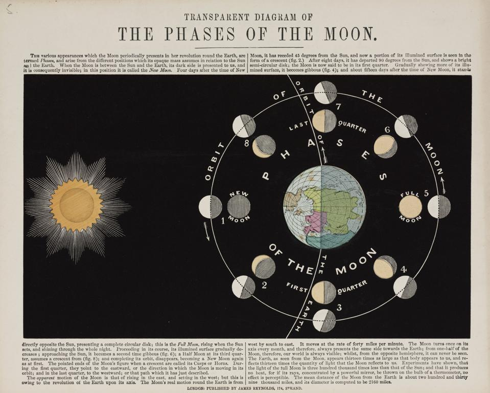 Lithograph of an astronomical diagram showing the phases of the Moon as it orbits the Earth. The appearance of the Moon when viewed from Earth is dependent on the relative positions of the Moon, the Earth and the Sun. When the Moon is directly between the Sun and Earth, its illuminated side is invisible to us and the Moon cannot be seen from Earth. This phase is known as the New Moon. As more of the illuminated surface of the Moon becomes visible it is said to be waxing, and just under 15 days after the New Moon, it is directly opposite the Sun and is seen as the Full Moon. It then wanes, with progressively less of its surface visible until, after 29.5 days, the cycle is complete and it disappears, becoming a New Moon again.  (Photo by SSPL/Getty Images)