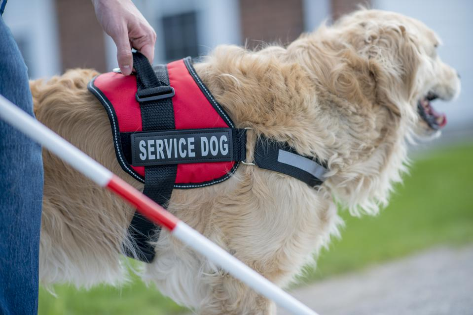 Blind Person With Service Dog