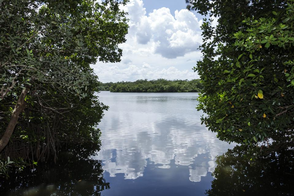 The Indian River Lagoon.