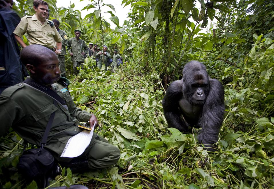 The Rangers of Virunga National Park