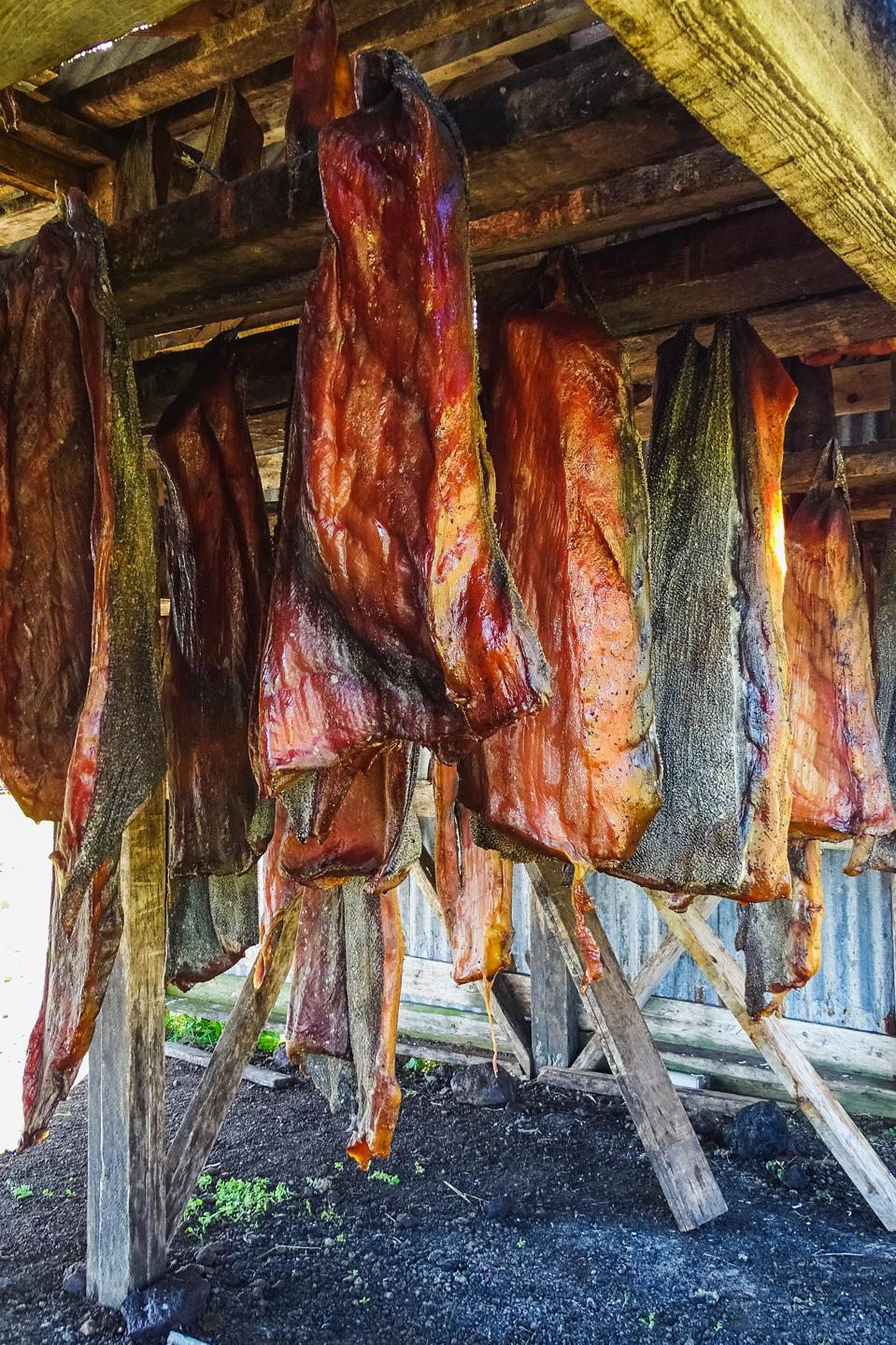 Specialty of iceland called hakarl fermented shark, drying in an open warehouse