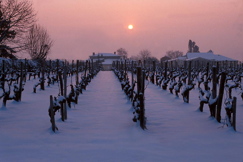 Winter vines in Fronsac (Photo by Philippe Roy)