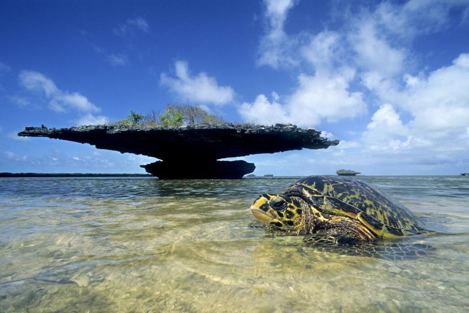 6 Marine Protected Areas Awarded Prestigious 'Blue Park' Designation For Using Science-Based Strategies