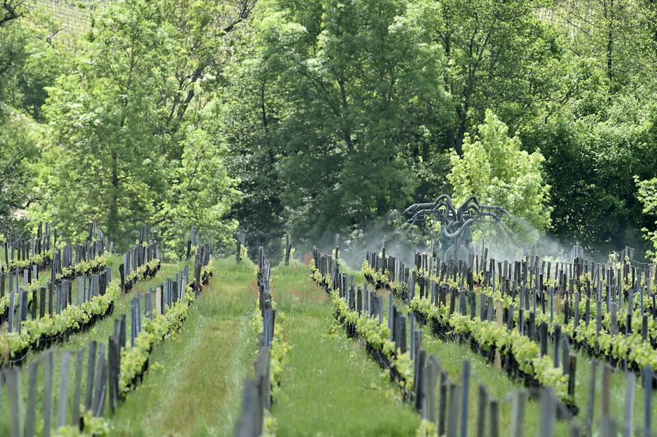 FRANCE-AGRICULTURE-WINE-ENVIRONMENT