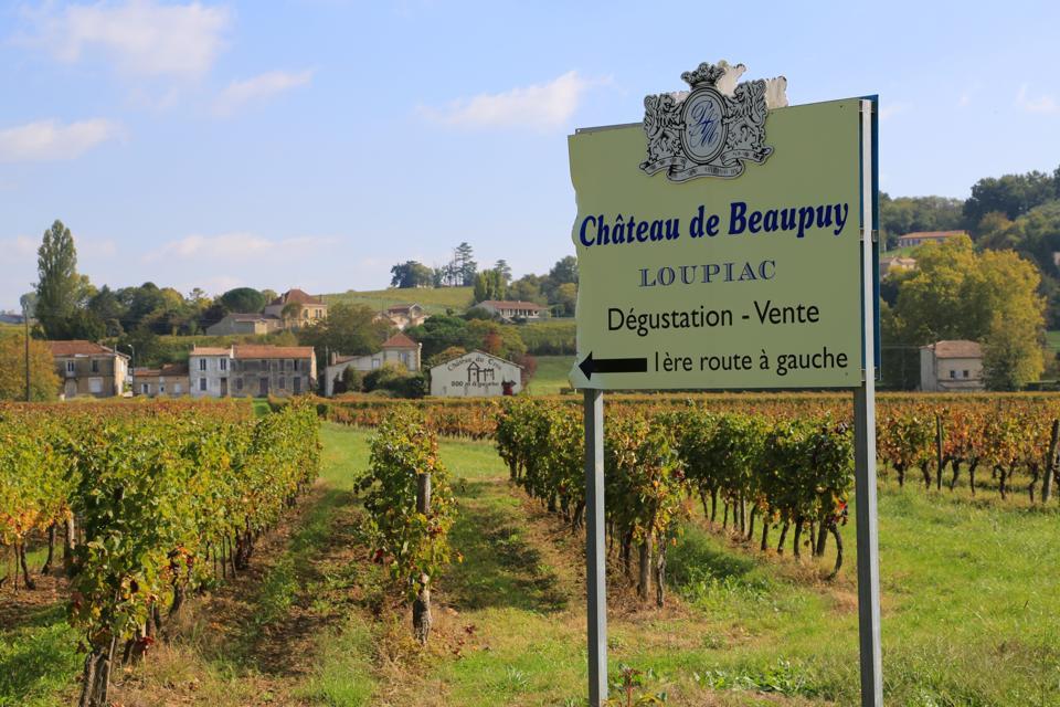 vineayards, Bordeaux, wine tasting