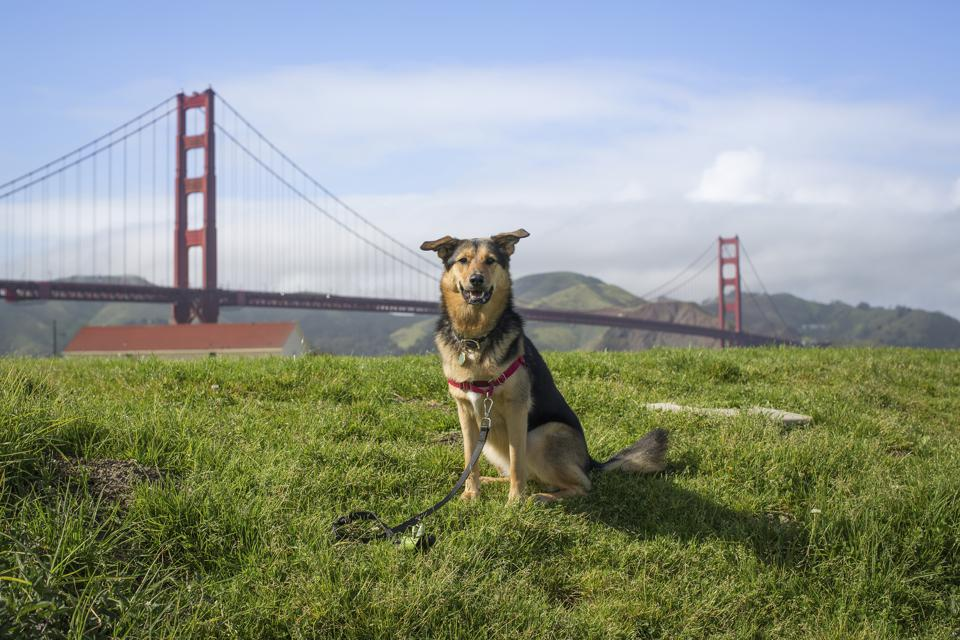The Best Pet-Friendly Hotels In San Francisco
