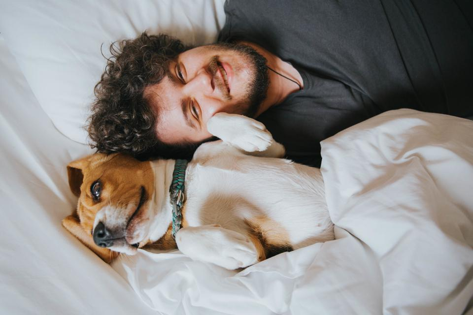 High Angle Portrait Of Man With Dog On Bed At Home