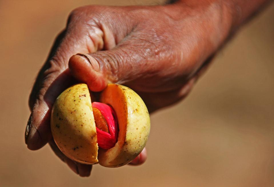 Fruit of a nutmeg