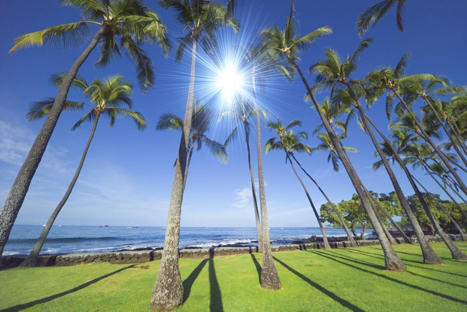 Palmy v Kailua Kona, Havaj