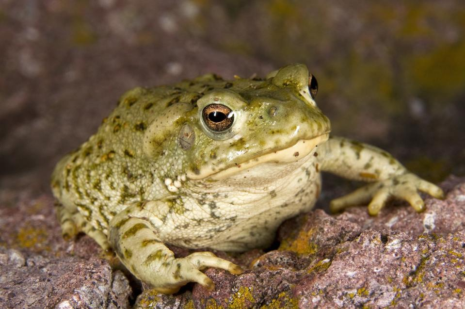 5-MeO-DMT: The 20-Minute Psychoactive Toad Experience That's Transforming Lives