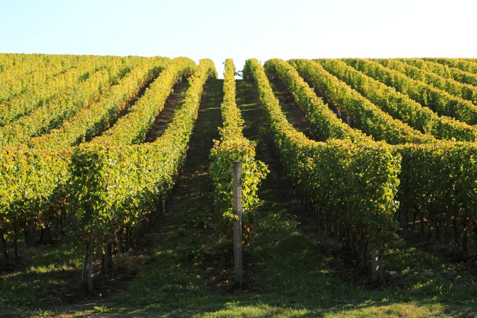 Vigne et vignoble des Côtes de Bordeaux