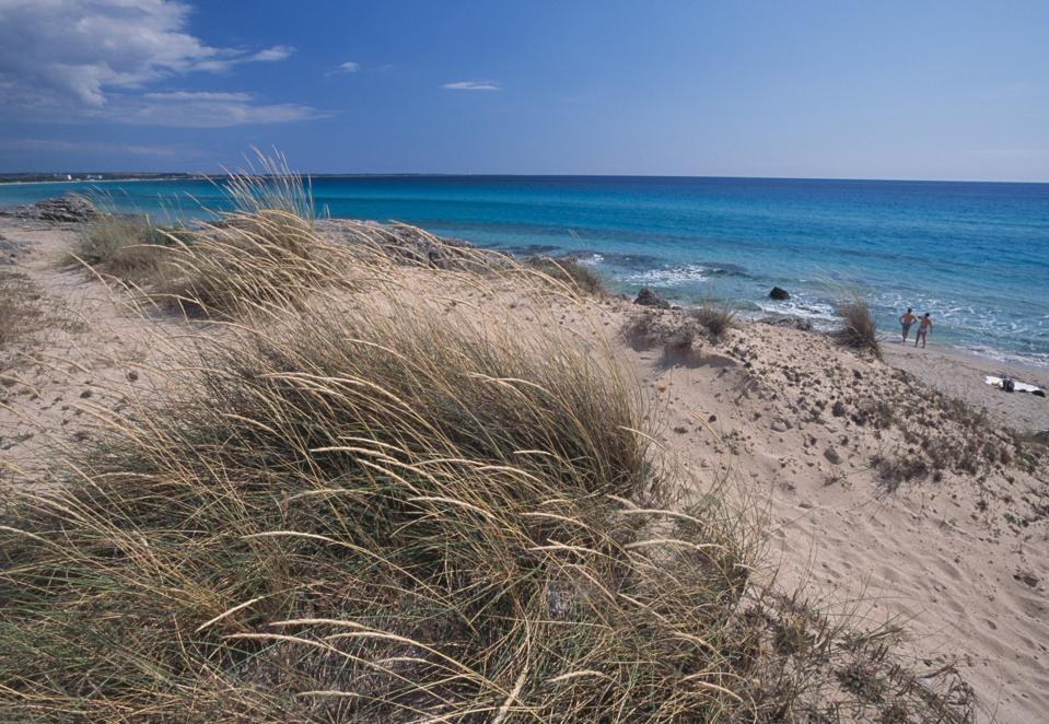 Marram Grass on the dunes of Salento, Apulia