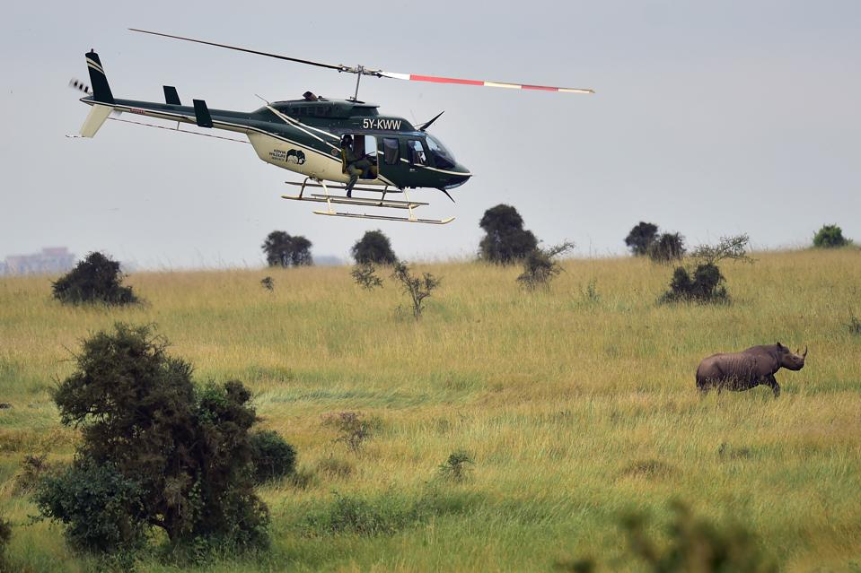 KENYA-WILDLIFE-RHINO-RELOCATION philanthropy tourism helicopter tagging