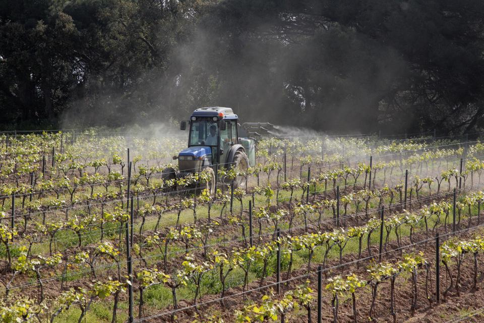 A wine-grower drives a tractor while spr
