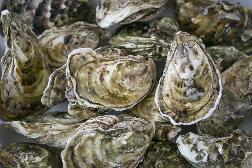 Full frame of fresh oyster