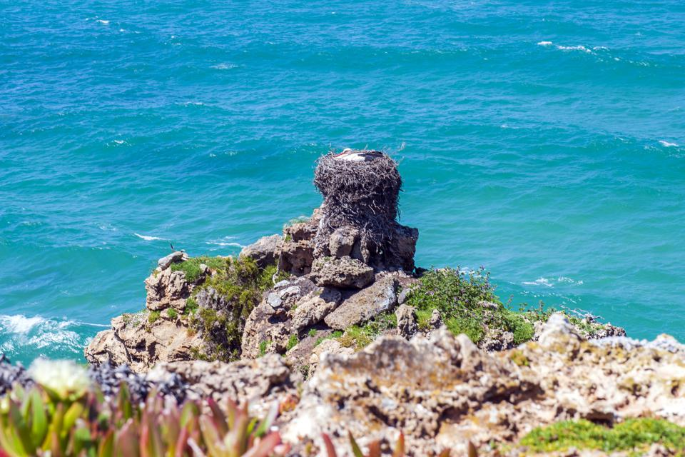 A stork's nest on the windswept western coastline of...