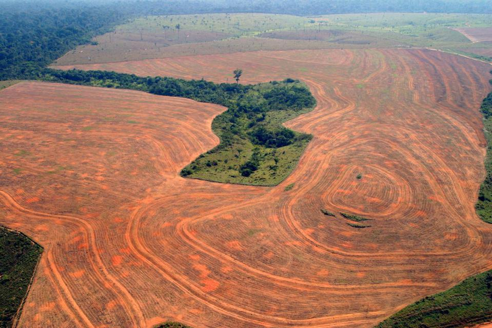 Norway Just Banned Deforestation