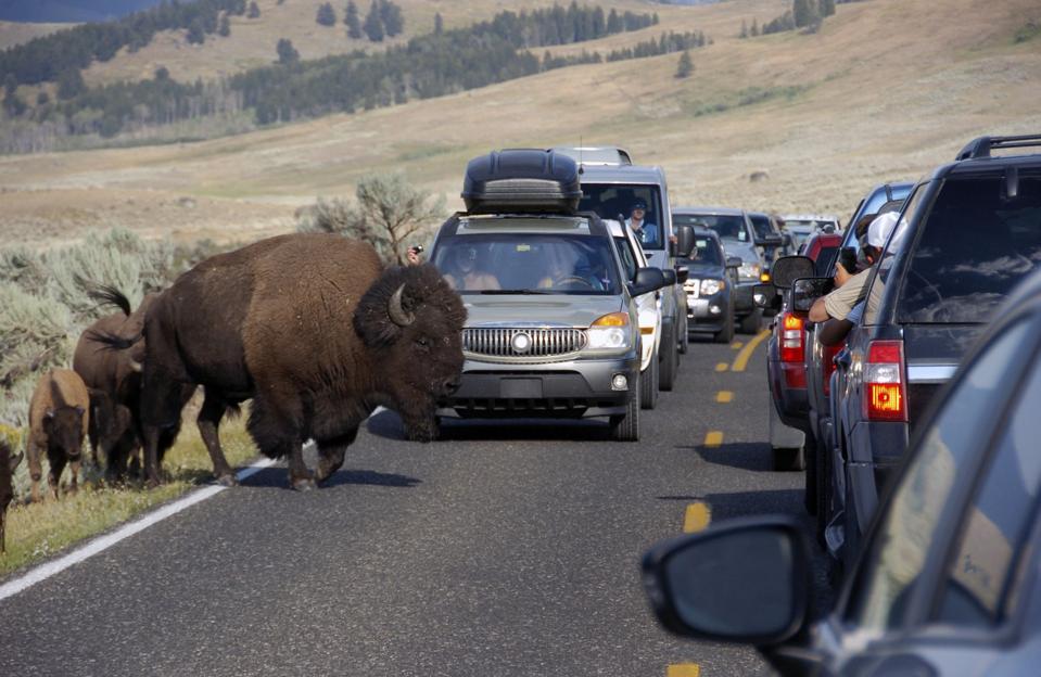 Yellowstone Ringing Phones
